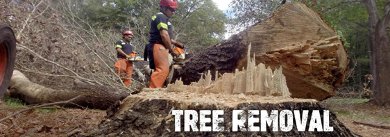 After Hours 24/7 Tree Removal
