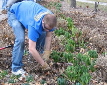 frankston-garden-clean-up